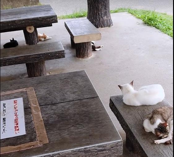 画像に alt 属性が指定されていません。ファイル名: cats.png